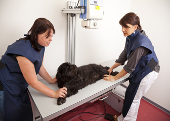 Veterinary Assistant Health Careers Drofficejobs Com